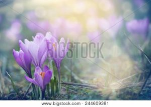 sample stock image with greens, yellows, and purples